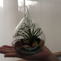 Awesome natural favor. Hand size terrariums