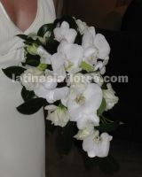 phaleanopsis and dendrobium orchid bouquet with white lisianthus