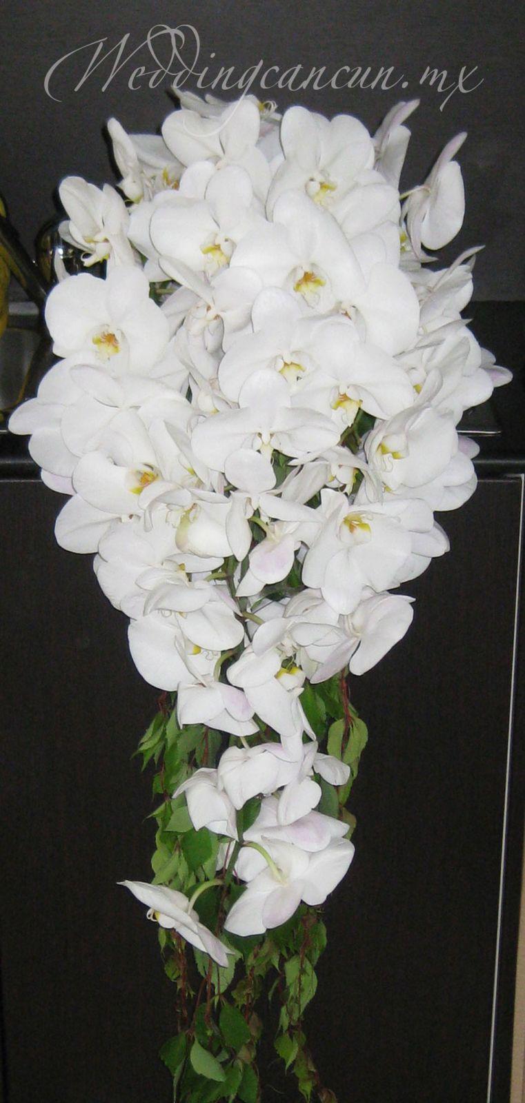 deluxe bridal bouquet. White phaleanopsis orchids