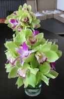 green cymbidium orchids with purple dendrobium orchid