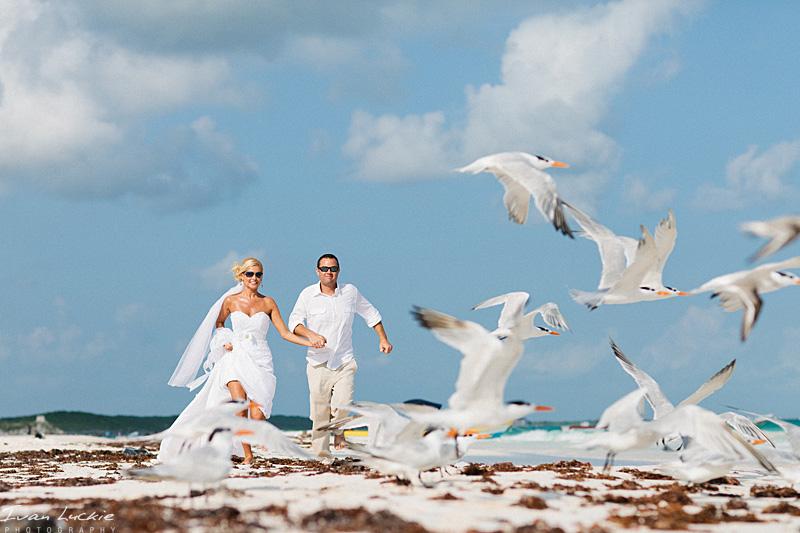 seagulls flight   LuckiePhotography