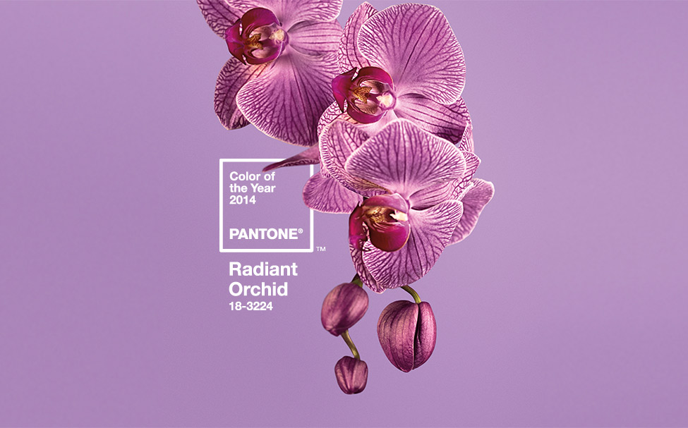 Pantone 2014 Color of the Year: Radiant Orchid