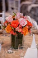 Live Aqua wedding setups MG 9679 2971863370 O