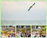 Parrot for rings, Beach Ceremony
