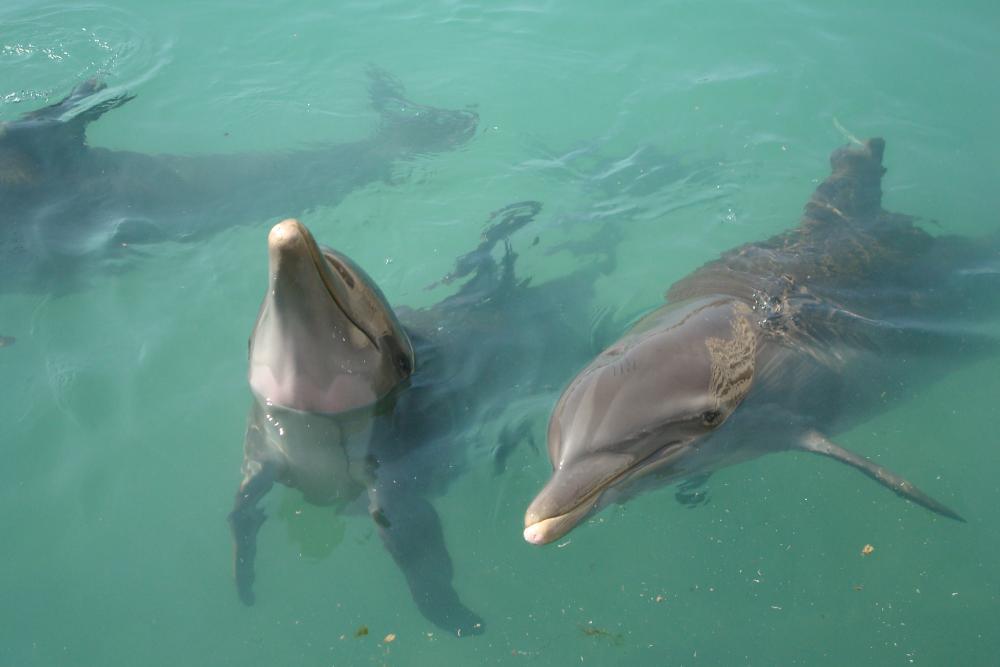 Delphinus, Dreams Cancun ... on-site dolphins!